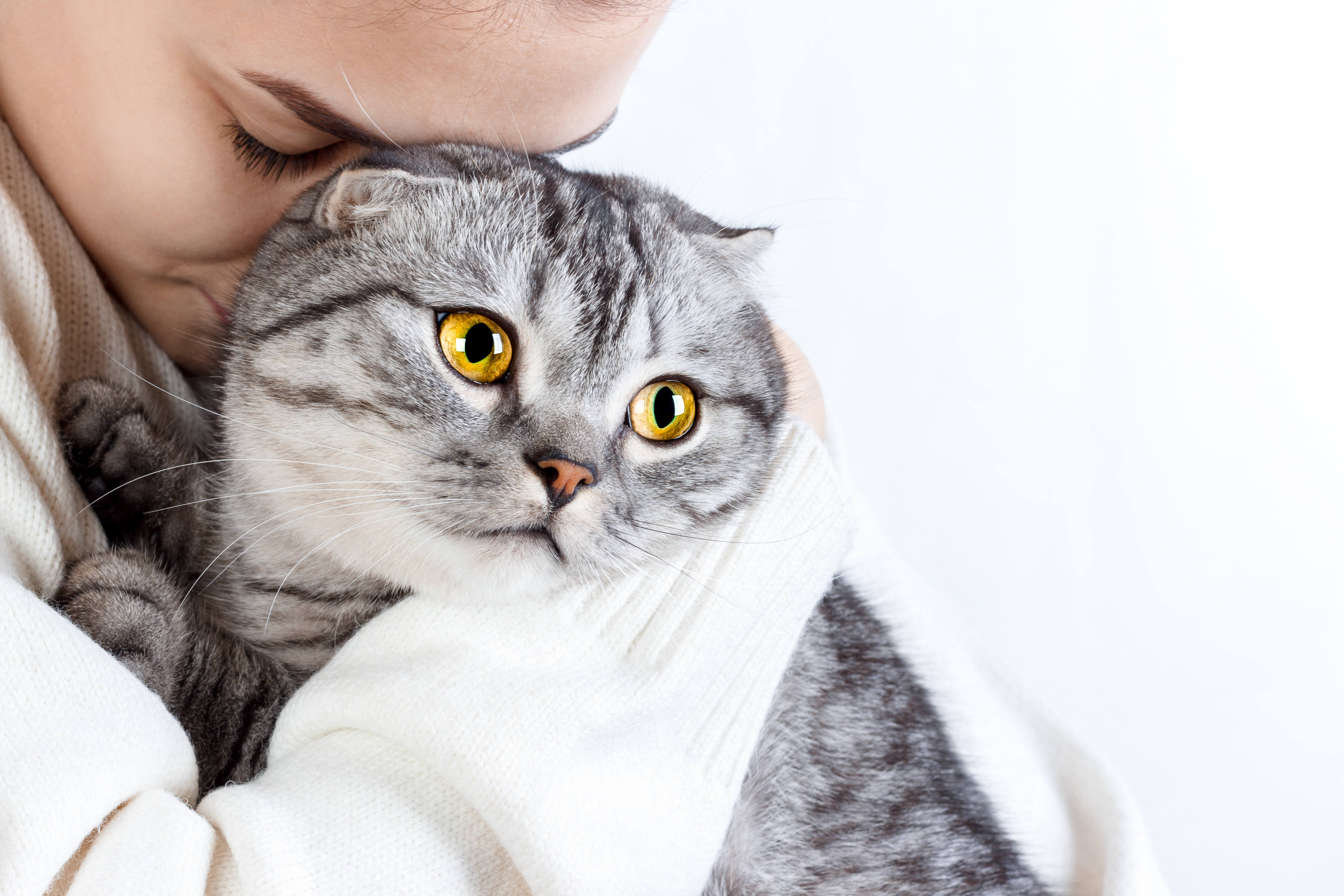 Young beautiful woman with fluffy cat at home.