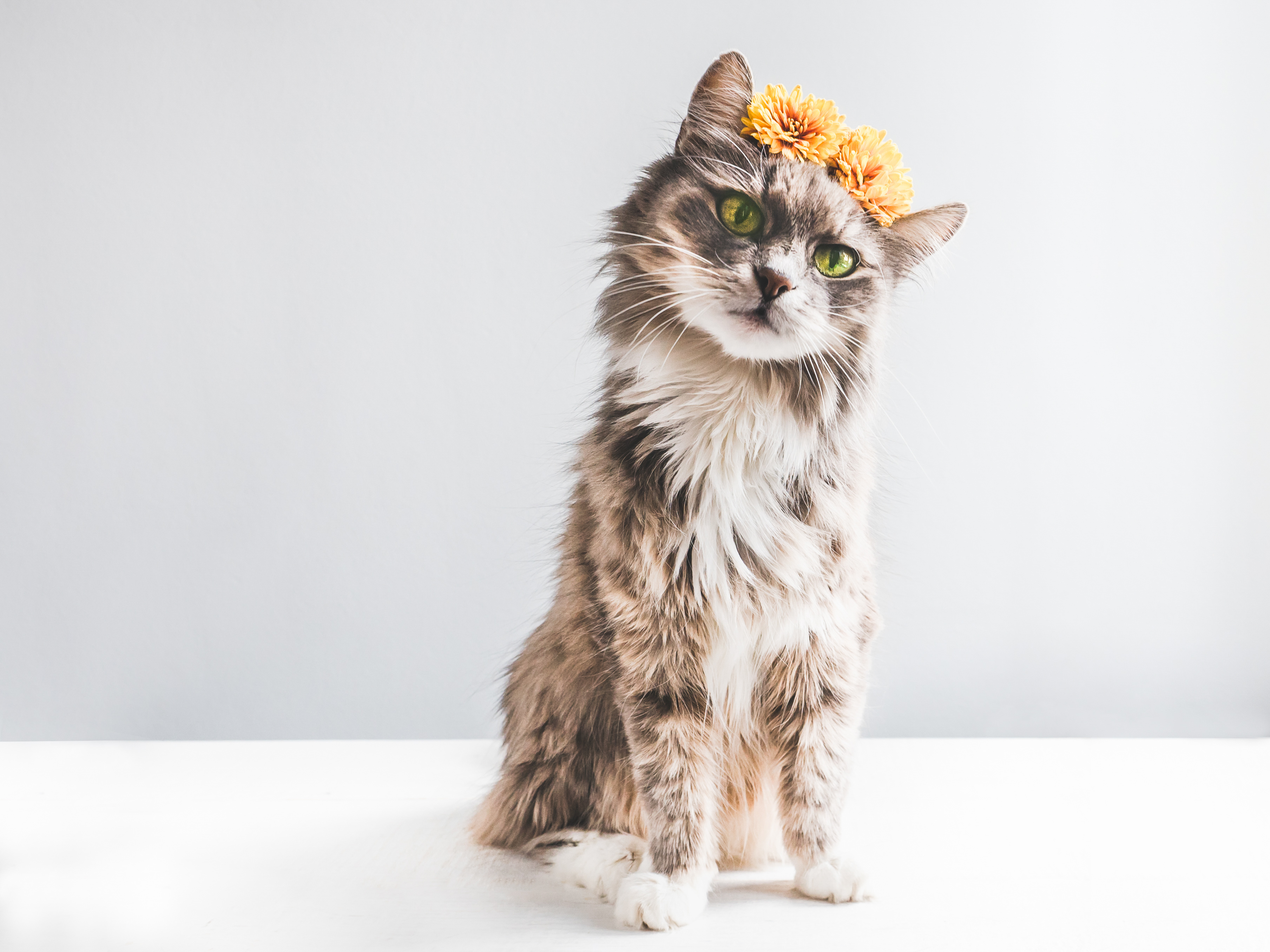 Charming, fluffy kitten with yellow flowers on a white background. Isolated, close-up