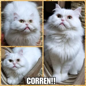 Corren!!