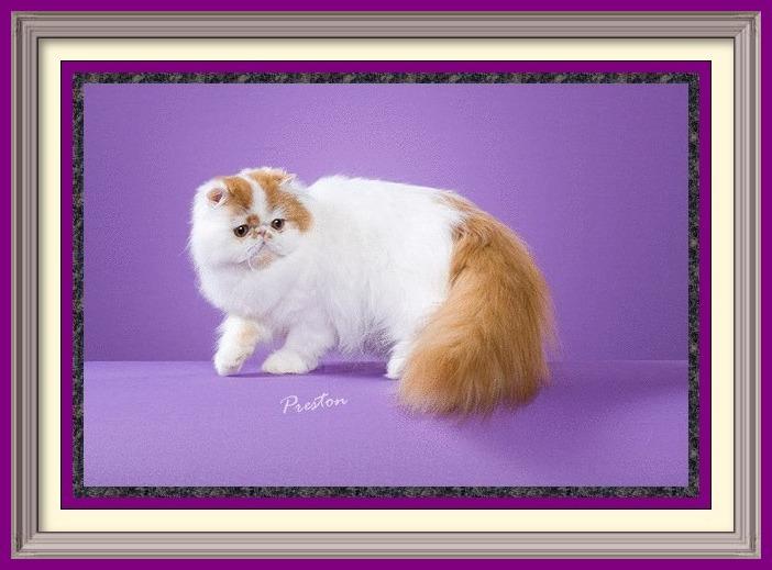 Olivia - framed