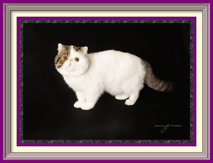 CH Purrtopia Grand Phinale-framed