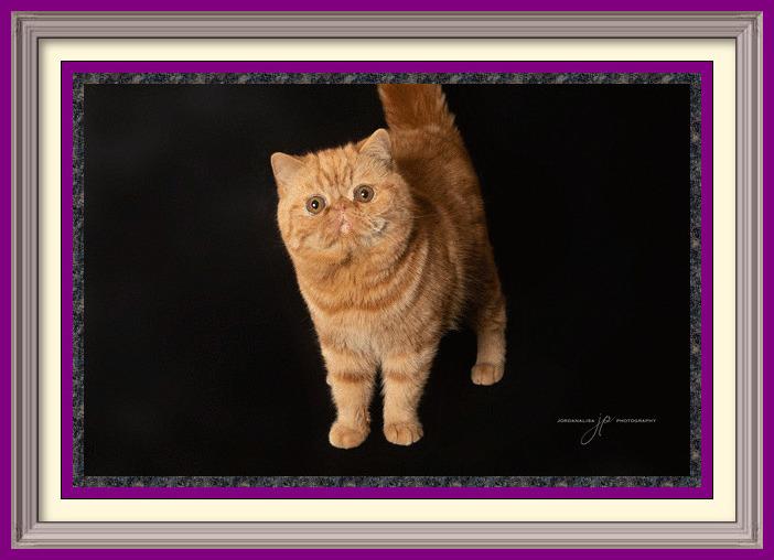 Longmire-1-framed