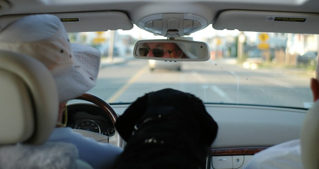 driver's responsibility for the passengers, inside the car with a dog