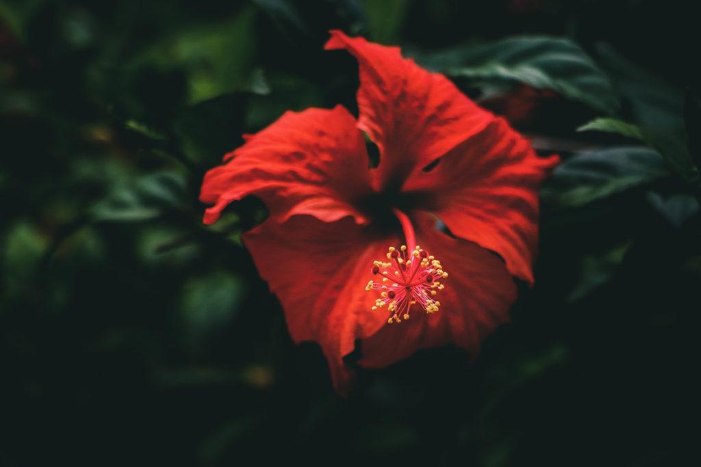 foto de Flores de Caléndula y Pétalos de Hibisco