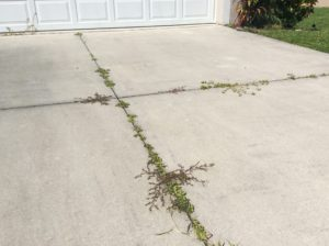 Ruined Driveway | Needed Pressure Washing Services