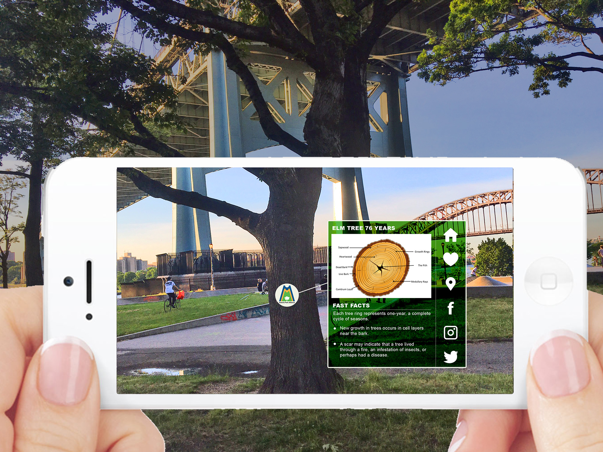 Augmented Reality Tree Ecology