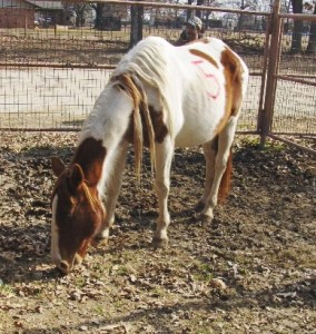 Wood Co Mare