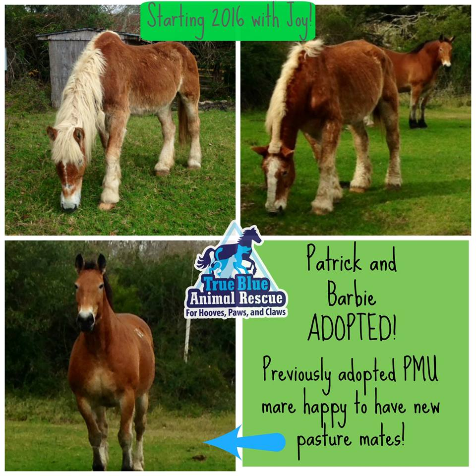 TBAR-Adopted-Patrick-Barbie-Horses