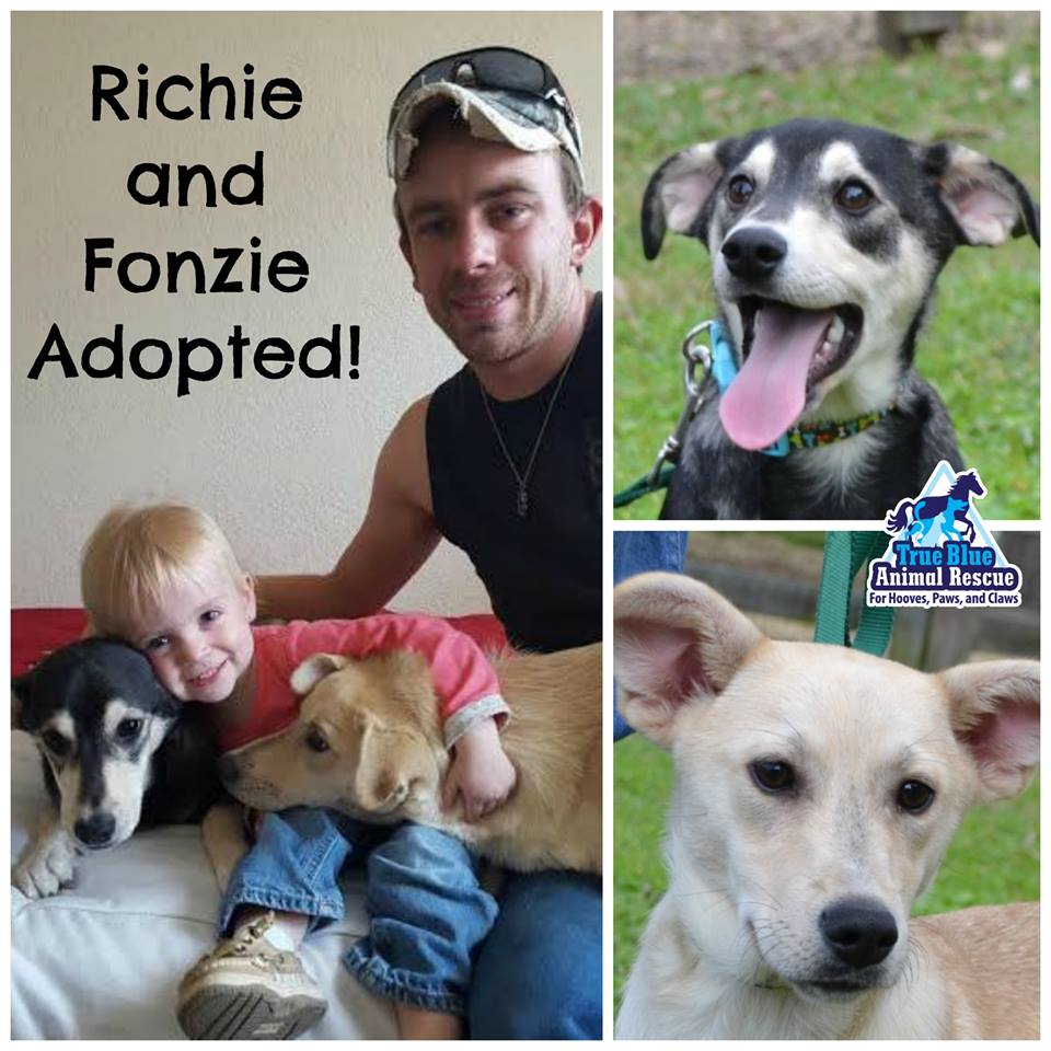 TBAR-Success-Adopted-Richie-Fonzie-Dogs