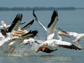 Birds of a feather -energynewsbeat