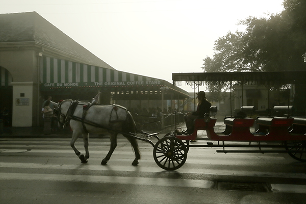 Mule and carriage in front of Cafe Du Monde in New Orleans French Quarter