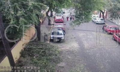Caen árboles en la CDMX debido a fuertes vientos