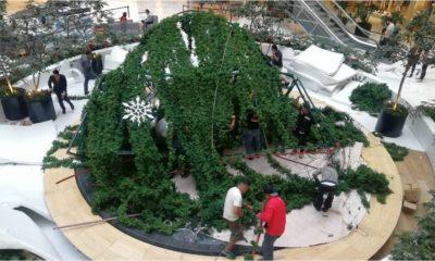Árbol, Gigante, Navidad, Navideño, Plaza Manacar, Plaza, Hombre, Personas, Herida,