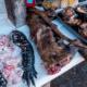 Compra, Venta, Animales, Perros, Gatos, COnsumo, China, Shenzhen, Mercados, Coronavirus, Covid-19, Prohíben, Prohibición,