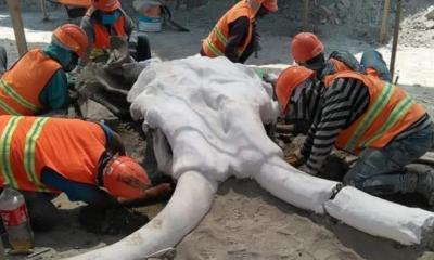 Hallan 60 restos de mamuts en Santa Lucía