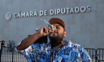 Proyecto de regulación del cannabis es más restrictivo y excluyente, asegura Patricia Mercado