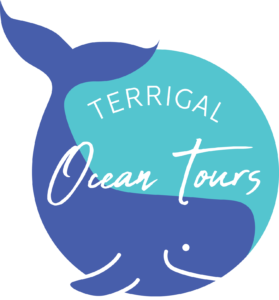 TOT Final Logo Design (White Fin and smile outline)