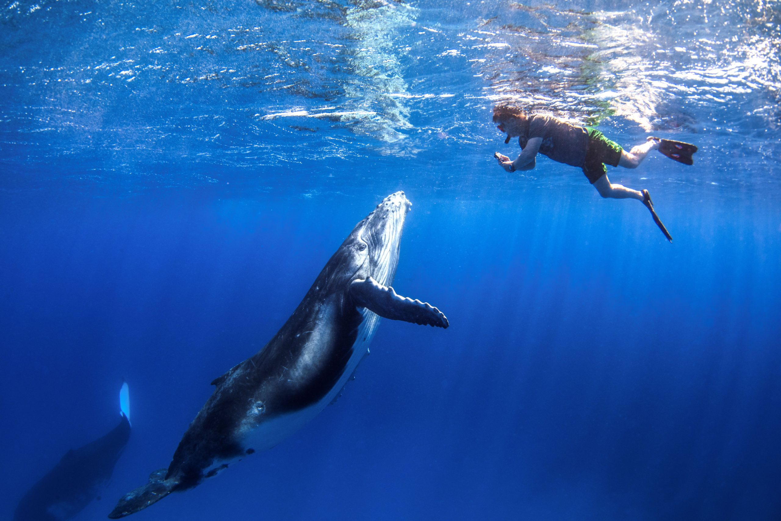 dive with whales