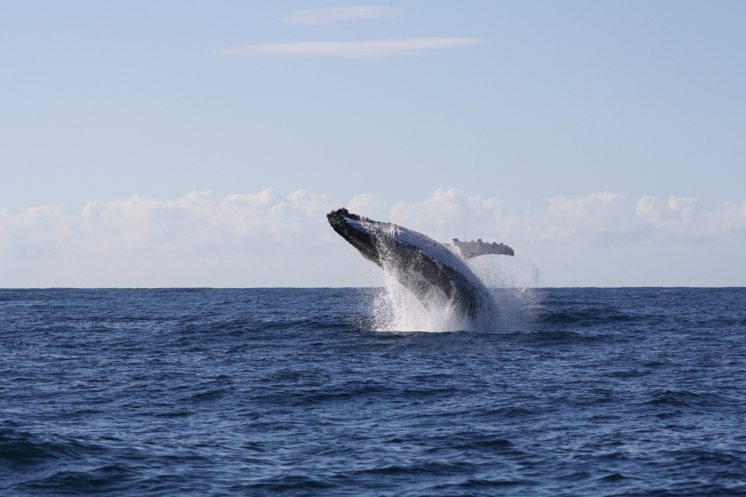 TOT - Whale photo