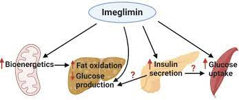 Imeglimin: Current Development and Future Potential in Type 2 Diabetes |  SpringerLink