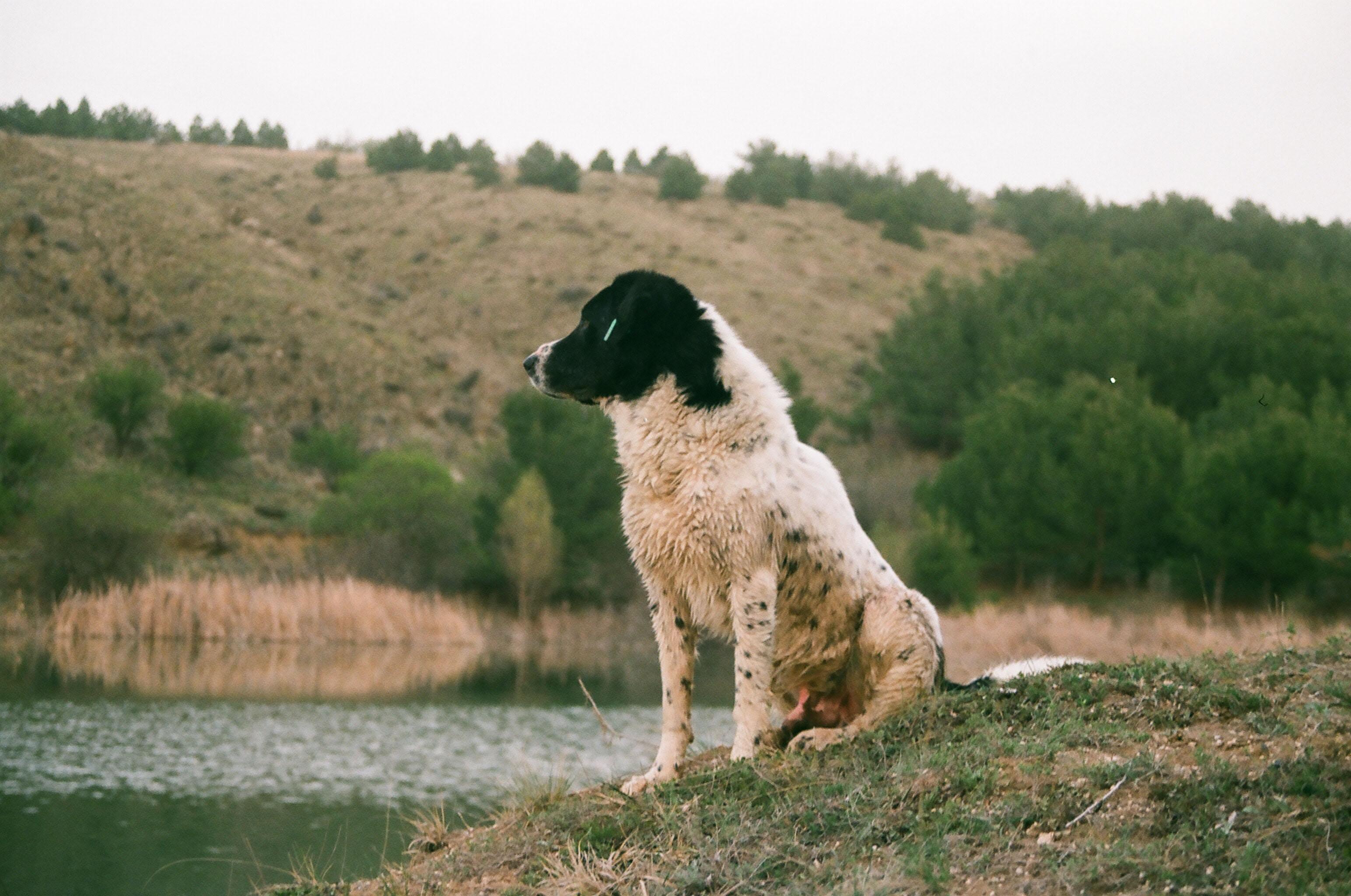 animal-canine-daylight-1662228