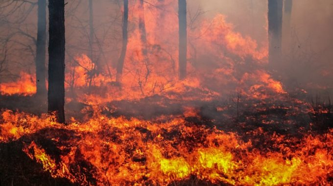 Wildland Fire Mapping Software | MapSavvy.com | OnTerra Systems USA