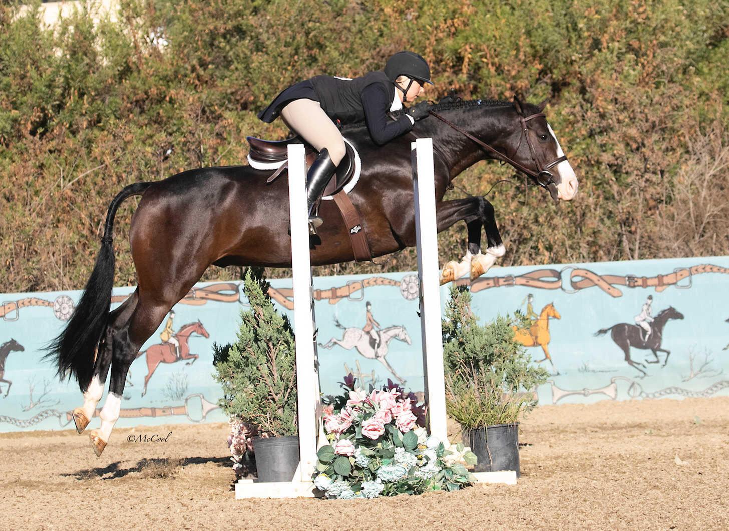 Horse Caso 2