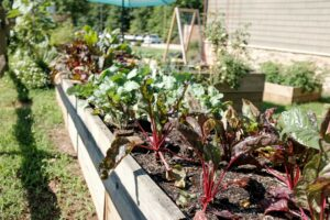 plants and vegetables in  a raised garden