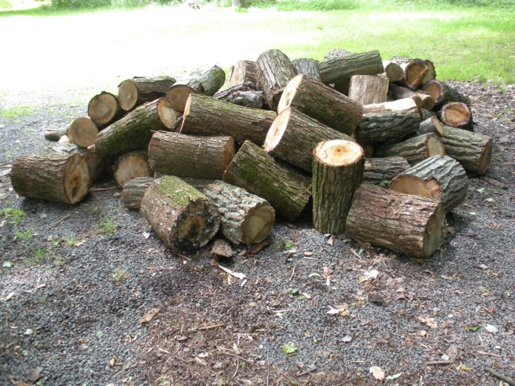 pile of sawcut logs laying on ground