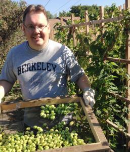 2014 Hops Harvesting