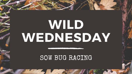 Wild Wednesday: Sow Bug Racing