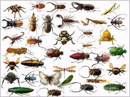 شركة مكافحة حشرات بالكامل بمكه