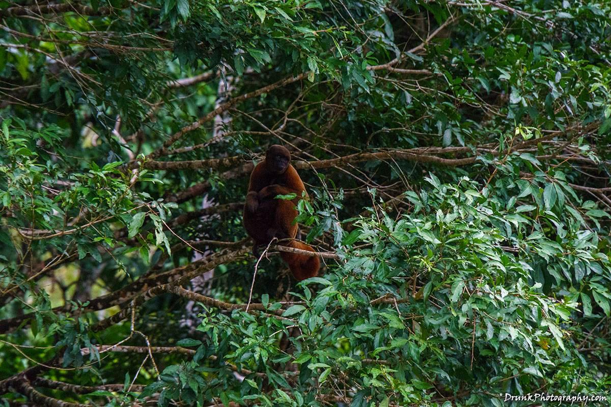 AmaZOOnico Selva Viva Woolly Spider Monkeys, Big Cats, Reptiles, Exotic Birds Drunkphotography.com