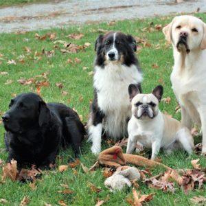 SVS | Dogs
