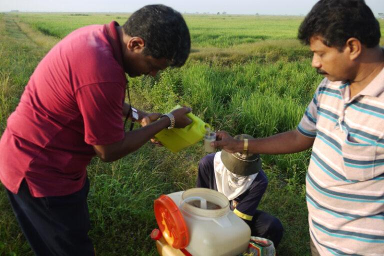 Malaysia AgriPOWER HGDF Rice Paddy Trial