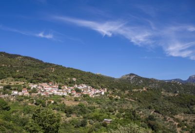 photograph of hill olive oil groves in Kastania Greece