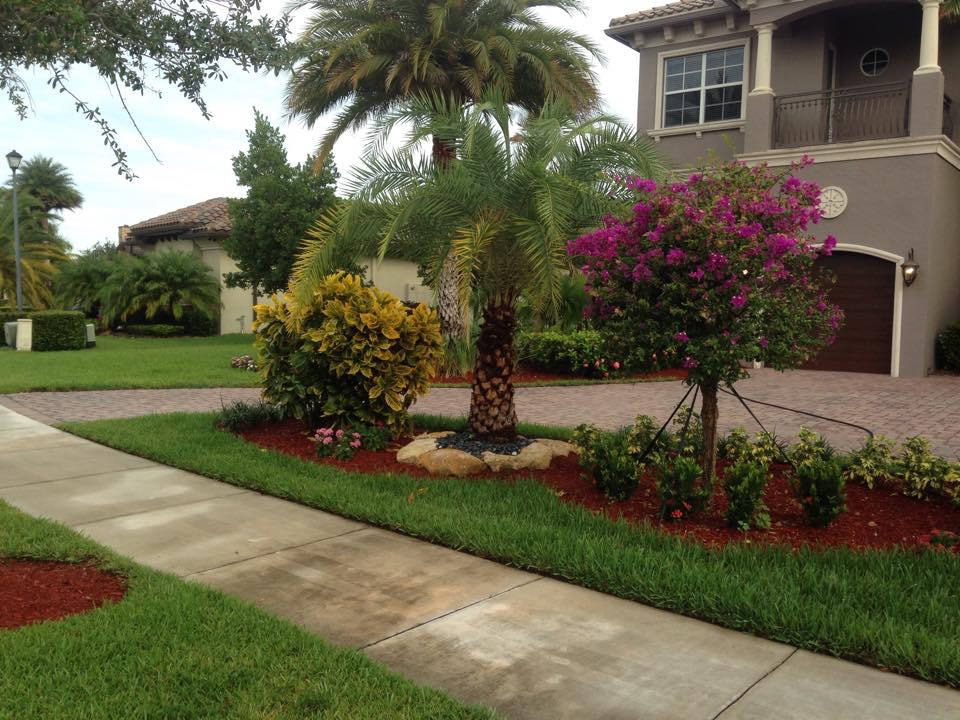 landscape service done in boca raton and coral springs fl surrounds