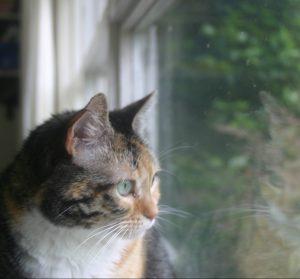 Eppie goes bird watching