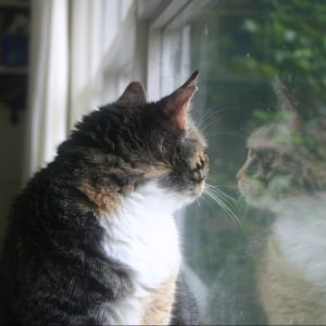 How much is that 'kitty' in the window?