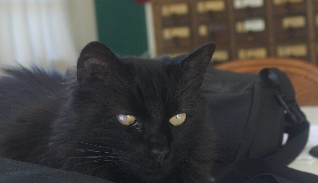 black cat on black camera bag