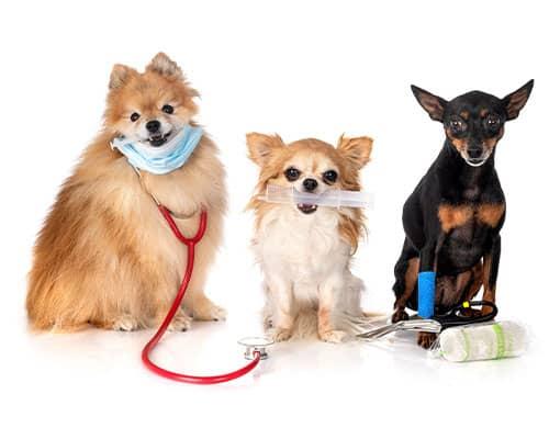 Veterinary Diagnostics