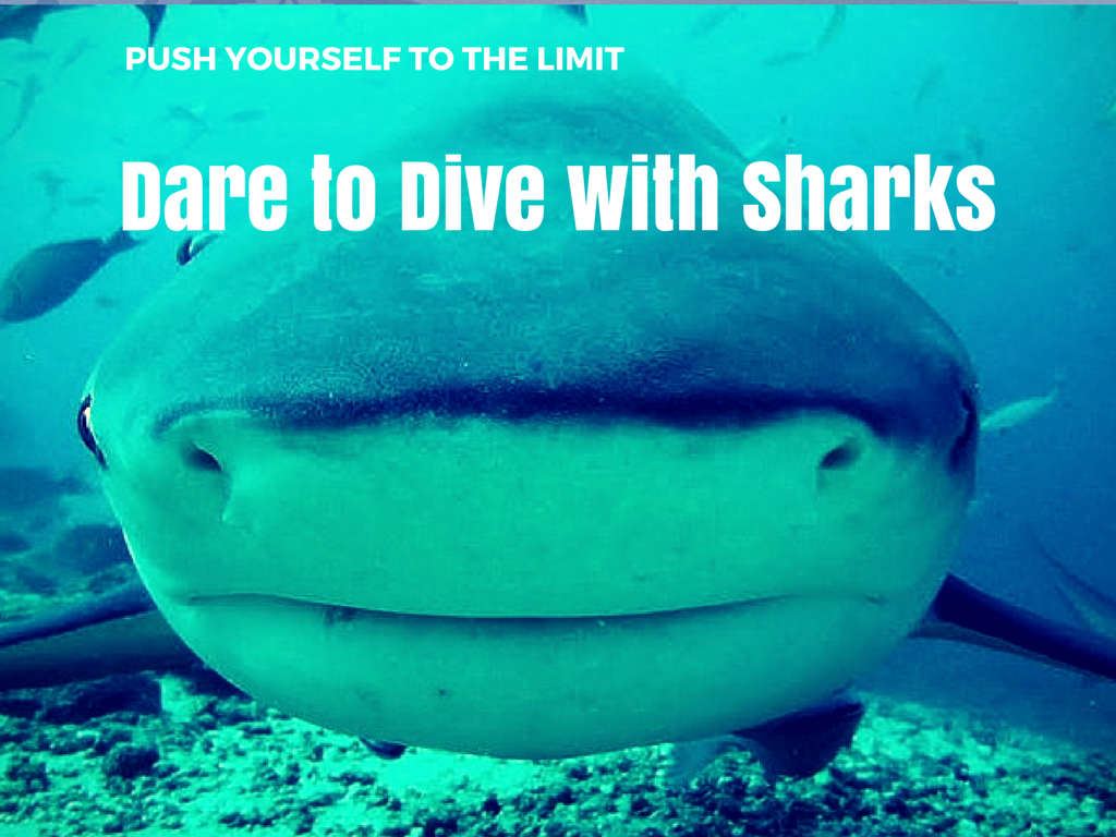 DARE TO DIVE WITH SHARKS