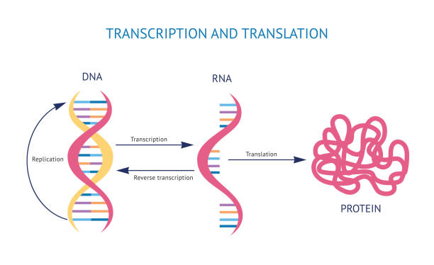 New mRNA Vaccine Technology and Applications for COVID-19 and Beyond
