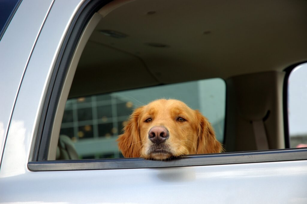 Safe Travels with Your Dog