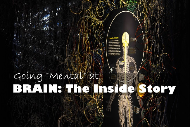 Brain- The Inside Story at Ontario Science Centre