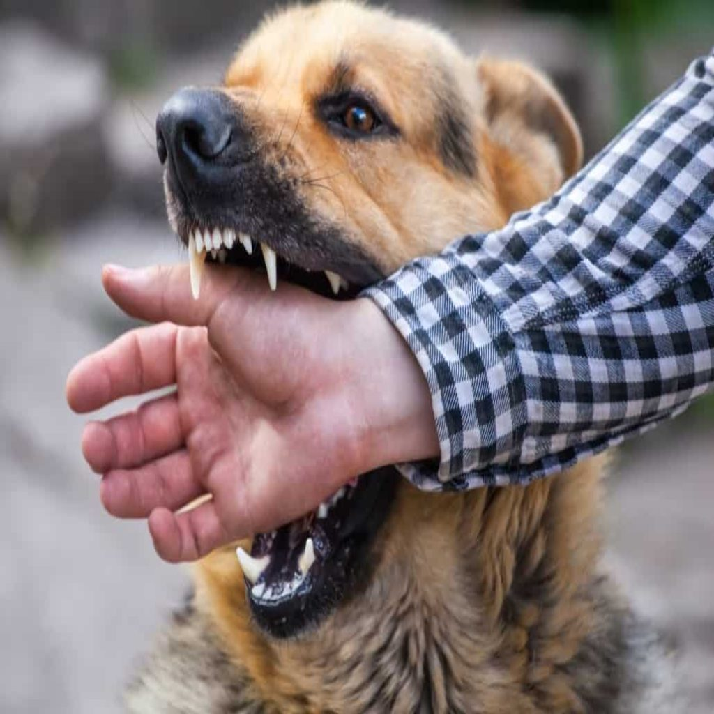 dog attack lawsuit