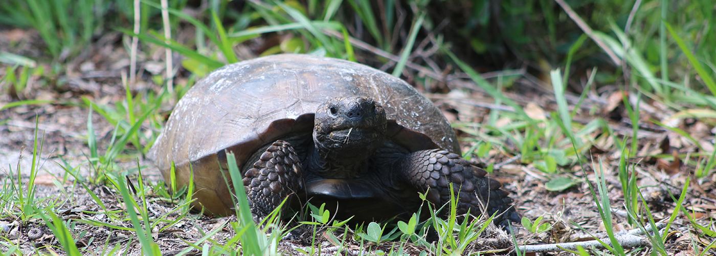 Anastasia State Park Animals