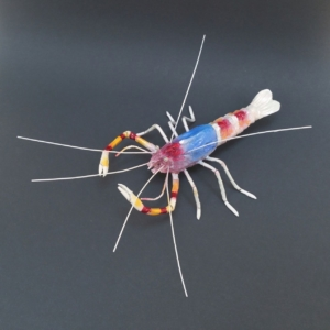 Banded Coral Shrimp Sculpture