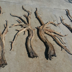 Branch Wall Sconces