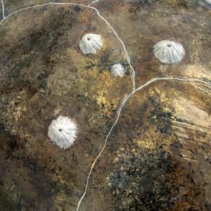 Loggerhead Sea Turtle Shell Detail
